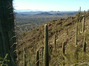 Saguaros in the foreground and Anthem, AZ in the background