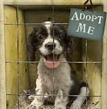 Picture of dog adoption